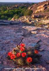 Enchanted Rock State Natural Area, state park, Texas Hill Country, Llano, Fredericksburg, Llano County, Gillespie County, Llano Uplift, claret cup cactus, Echinocereus triglochidiatus
