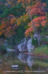 Lost Maples State Natural Area, park, Texas Hill Country, Bandera County, Vanderpool, Sabinal River, bigtooth maple, trees, Acer grandidentatum