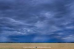 San Saba County, Texas Cross Timbers, rain, wheat, field