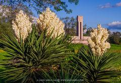 Fannin Memorial Monument, Presidio la Bahía, Goliad, Texas, Texas Revolution, 1836, spanish dagger, bloom