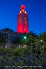 Austin, University of Texas, campus, Tower, Swimming and Diving, national championship, Texas bluebonnets, Lupinus texensis, yucca, prickly pear cactus, Opuntia engelmannii