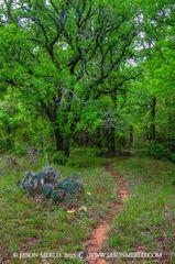 San Saba County, Texas Cross Timbers, Texas Hill Country, cedar elm, trees, Ulmus crassifolia