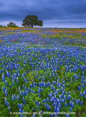 2015041115, Texas bluebonnets and wildflowers