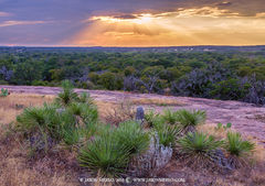 Enchanted Rock State Natural Area, state park, Texas Hill Country, Llano, Fredericksburg, Llano County, Gillespie County, Llano Uplift, Buckley yucca, Yucca constricta