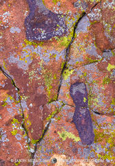 San Saba County, Texas Cross Timbers, Texas Hill Country, lichen, sandstone