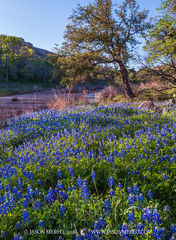Enchanted Rock State Natural Area, state park, Texas Hill Country, Llano, Fredericksburg, Llano County, Gillespie County, Llano Uplift, Texas bluebonnets, Lupinus texensis, wildflowers