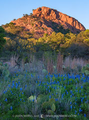 Enchanted Rock State Natural Area, state park, Texas Hill Country, Llano, Fredericksburg, Llano County, Gillespie County, Llano Uplift, Texas bluebonnets, Lupinus texensis, prickly pear, cactus