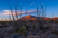 2016110809, Last light on the Guadalupe Mountains through ocotillo