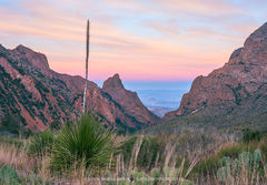 Big Bend National Park, Brewster County, West Texas, Chihuahuan Desert, Chisos Mountains, the Window, sotol, Dasylirion texanum