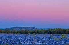 2017033004, Earth shadow over field of Texas bluebonnets