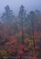 Guadalupe Mountains National Park, West Texas, Culberson County, Chihuahuan Desert, McKittrick Canyon, bigtooth maple, trees, pine, fog, Acer grandidentatum, fall color