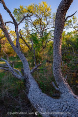 San Saba County, Texas Cross Timbers, Texas Hill Country