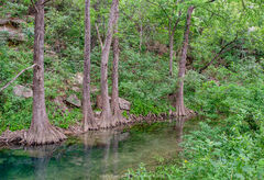 2018061801, Cypress trees on the creek