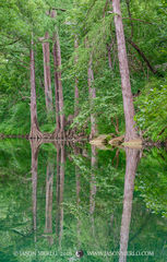 2018062003, Cypress trees reflected in Onion Creek