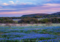 2019040103, Texas bluebonnets at dusk