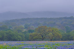 2019040601, Oaks and Texas bluebonnets in rain and fog