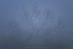 2019040704, Mesquite in fog