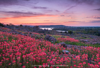 Texas Wildflowers Images