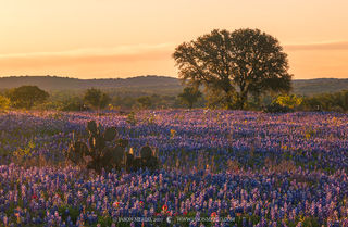2020 Bluebonnet Forecast (Part III) - Texas Hill Country