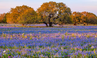 2020 Bluebonnet Forecast (Part II) - South Texas