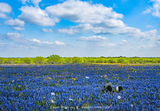 Contributing factors for a bluebonnet bloom (Part I)
