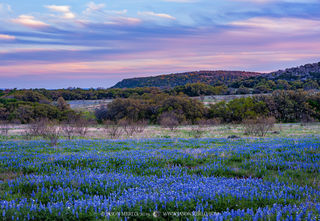 Contributing factors for a bluebonnet bloom (Part IV): The Texas Hill Country