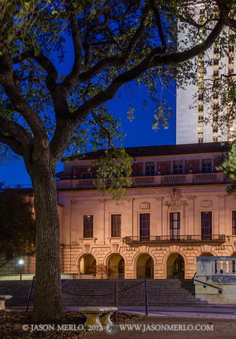Austin, University of Texas, campus, Main Building, live oak, tree, Quercus virginiana
