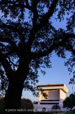 Austin, University of Texas, campus, live oak, tree, Quercus virginiana, Lyndon B. Johnson Presidential Library