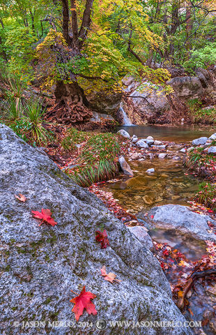 Guadalupe Mountains National Park, West Texas, Culberson County, Chihuahuan Desert, Smith Spring, fall color, waterfall, creek