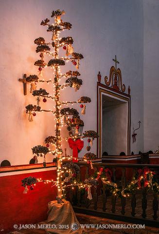 2015122202, Agave flower Christmas tree