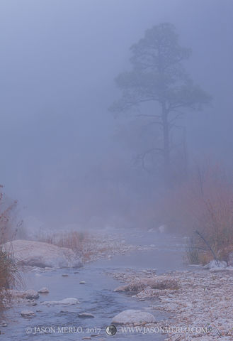 Guadalupe Mountains National Park, West Texas, Culberson County, Chihuahuan Desert, McKittrick Canyon, pine, tree, fog, McKittrick Creek