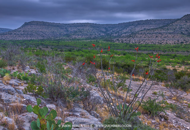 Independence Creek Preserve, The Nature Conservancy, Terrell County, West Texas, Chihuahuan Desert, Fouquieria splendens, ocotillo, valley