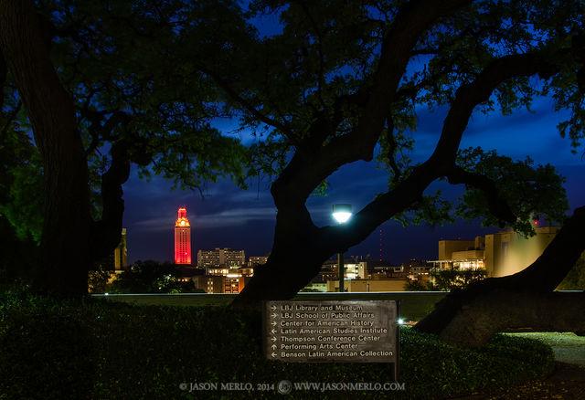 Austin, University of Texas, campus, live oak, trees, Quercus virginiana, Tower