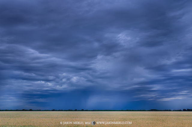 San Saba County, Texas Cross Timbers, rain, wheat, field