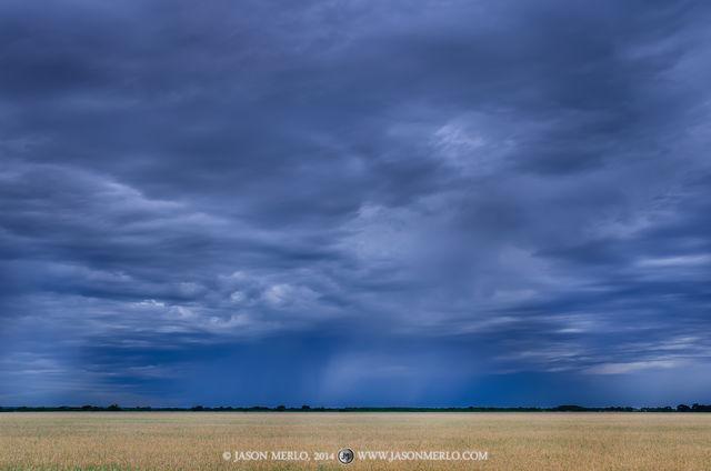 2014052501, Rain shower over wheat field