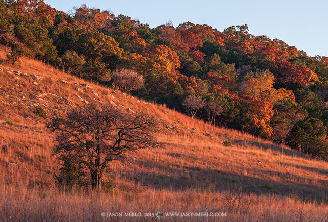Balcones Canyonlands National Wildlife Refuge, Doeskin Ranch, Burnet County, Texas Hill Country, fall color