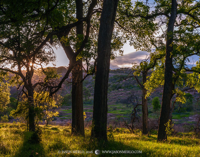 Enchanted Rock State Natural Area, state park, Texas Hill Country, Llano, Fredericksburg, Llano County, Gillespie County, Llano Uplift, cedar elm, trees, Ulmus crassifolia