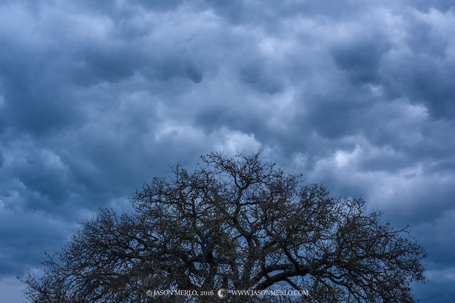 2016110601, Post oak crown under cloudy skies