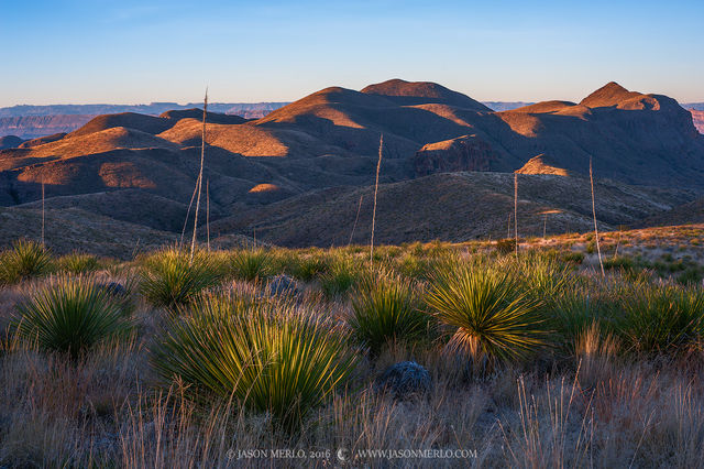 2016121301, First light on sotol and Goat Mountain Big Bend Nat