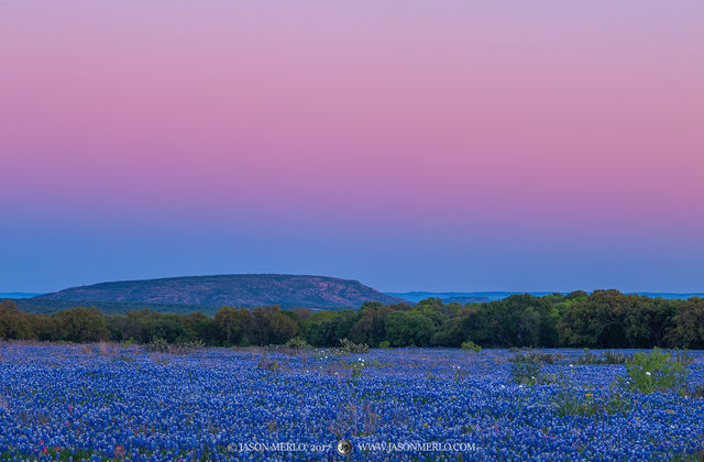 San Saba County, Texas Hill Country, dusk, Texas bluebonnets, Lupinus texensis, wildflowers