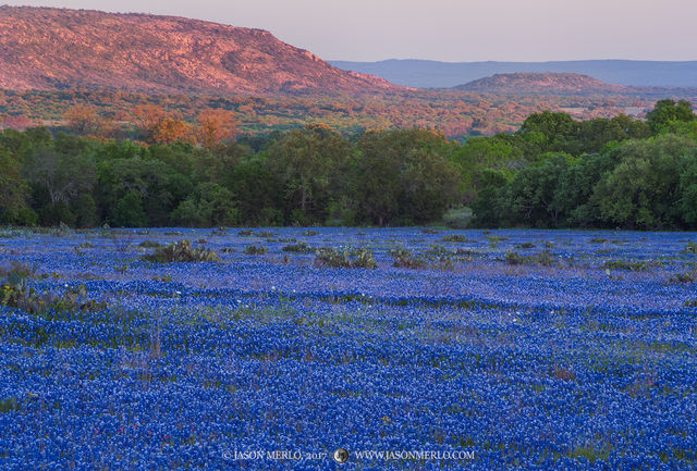 San Saba County, Texas Hill Country, sunset, Texas bluebonnets, Lupinus texensis, wildflowers, hills