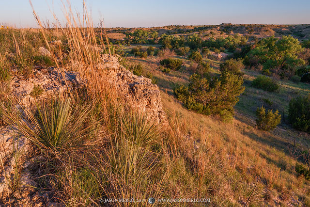 Armstrong County, Claude, Texas Panhandle Plains, North Texas, West Texas, Llano Estacado, High Plains, soapweed yucca,  Yucca glauca, sunset