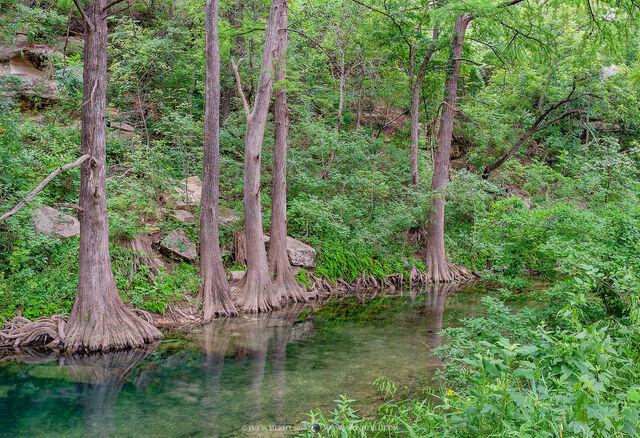 2018061801, Cypress trees on Onion Creek