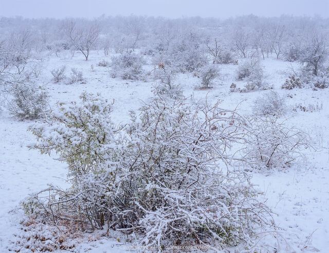 San Saba County; Texas Cross Timbers; winter; snow; blizzard; snowstorm