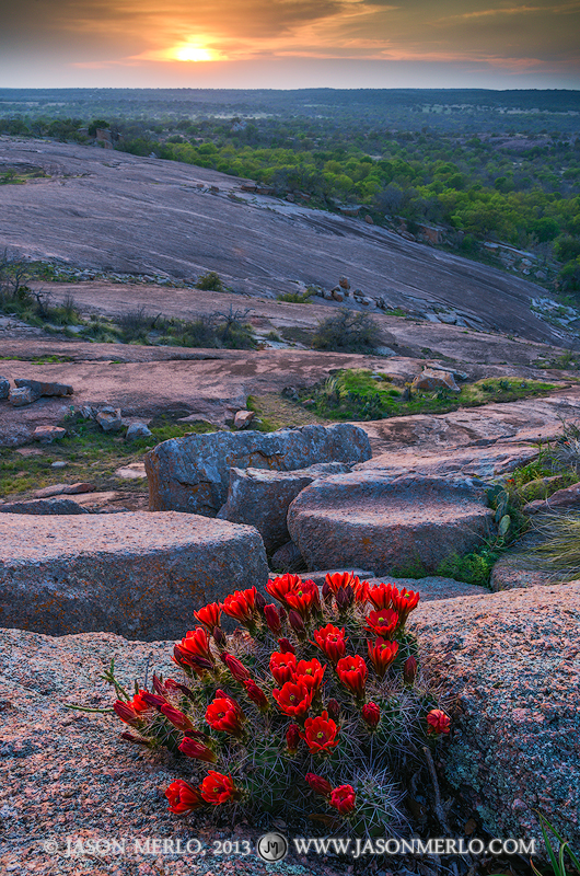 A claret cup cactus (Echinocereus triglochidiatus) in bloom growing in the crack between boulders on Little Rock at sunset at...
