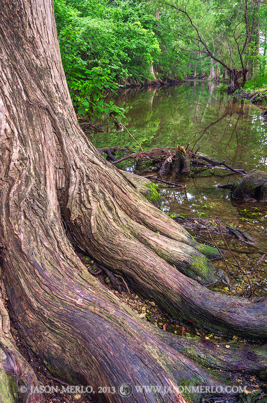 Cibolo Nature Center, Kendall County, Boerne, Texas, Hill Country, Cibolo Creek, cypress, trees, photo
