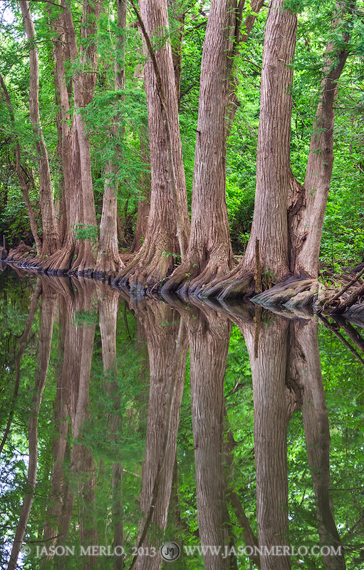 Cypress trees reflected in Cibolo Creek at Cibolo Nature Center in Boerne in theTexas Hill Country.