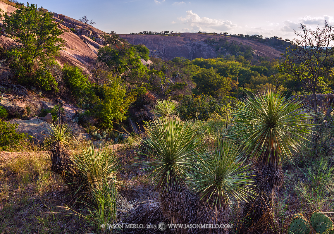 Enchanted Rock State Natural Area, state park, Texas Hill Country, Llano, Fredericksburg, Llano County, Gillespie County, Llano Uplift, Buckley yucca, Yucca constricta, photo