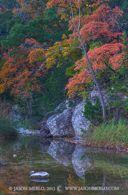 Lost Maples State Natural Area, park, Texas Hill Country, Bandera County, Vanderpool, Sabinal River, bigtooth maple, trees, Acer grandidentatum, photo