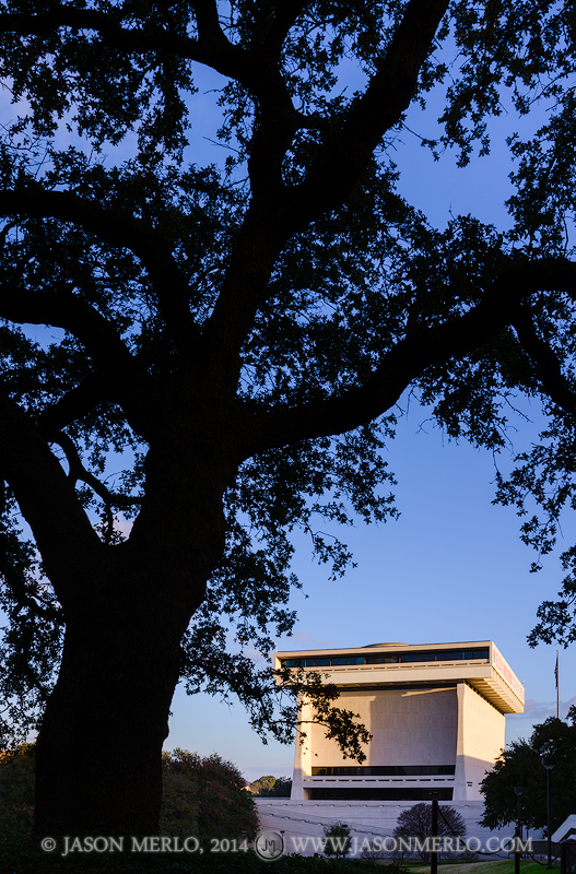 Austin, University of Texas, campus, live oak, tree, Quercus virginiana, Lyndon B. Johnson Presidential Library, photo